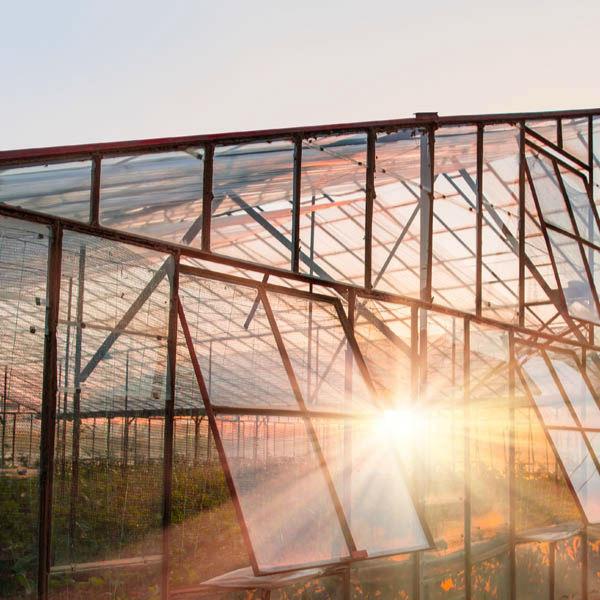 农场亲子乐园玻璃温室大棚